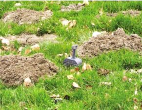 Wühlmausschäden auf Wiese